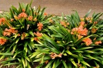 Waiheke Flora