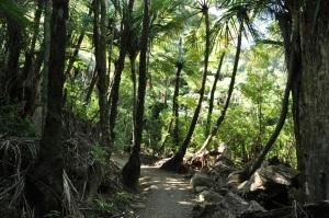 Mt. Mania trail