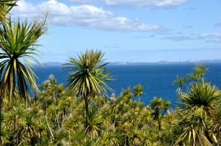 Tiritiri Matangi