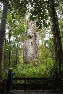 Te Matua Ngahere (Father of Forest)