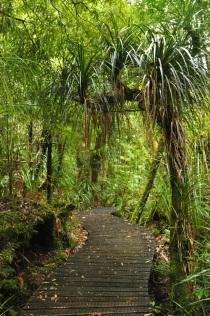 Waipoua Forest 4