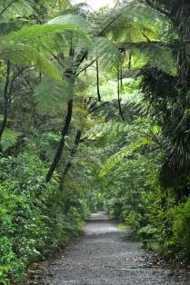 Waipoua Forest 5