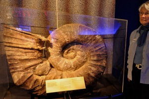 Ammonite, 140 M years