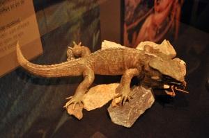 Tuatara, living dinosaur