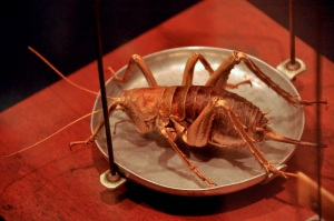 Weta insect
