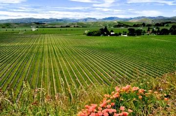 Brancott winery