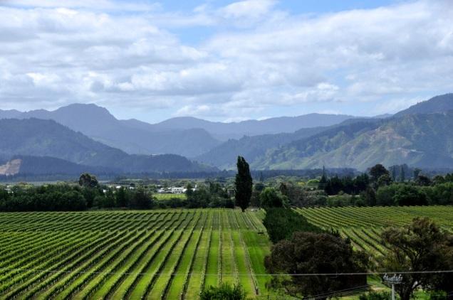 Highfield Estate Vines