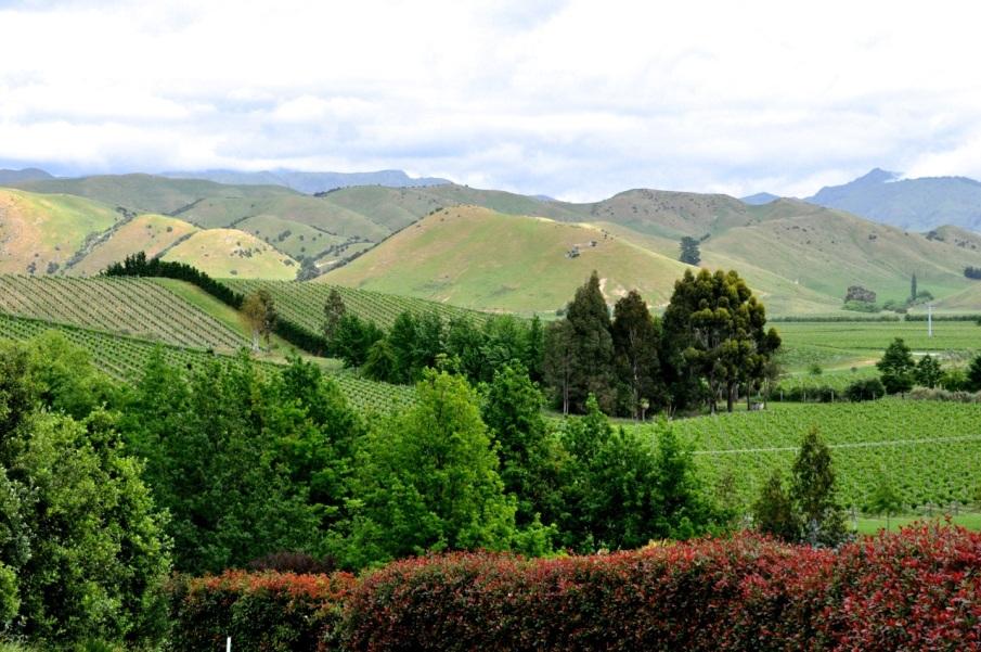 Marlborough Hills