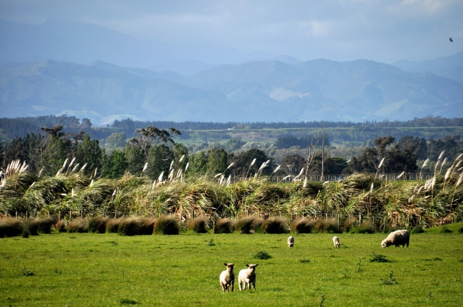 Martinborough Region