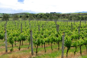 Hawke's Bay Vines