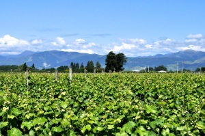 Tasman Winery