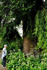 Buyna Buyna Pine