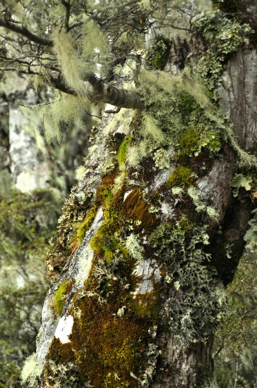 Tree moss detail