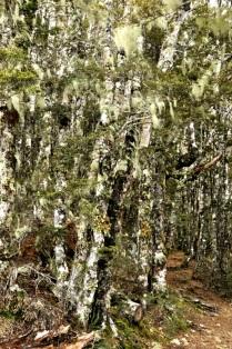 tree moss & lichen
