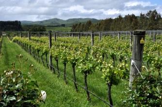 Vynfields vines