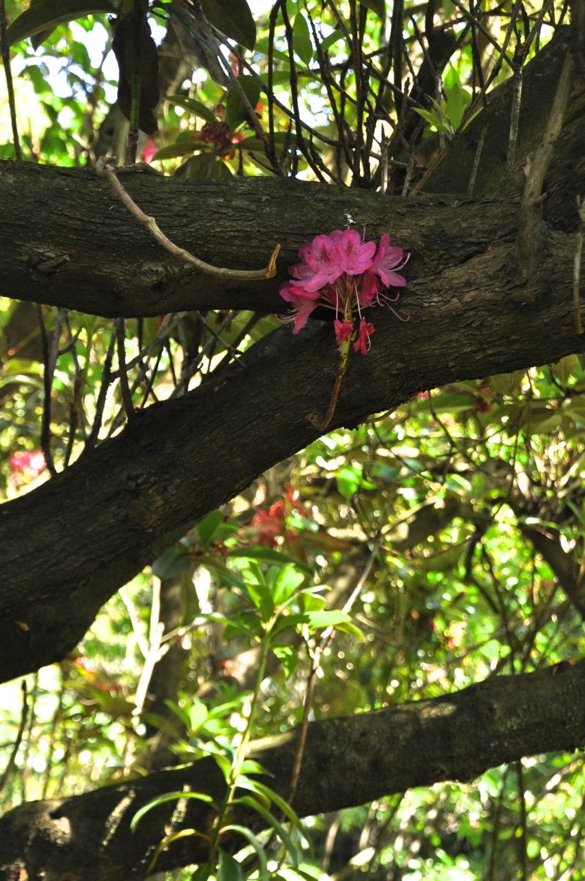 Even trunks bloom