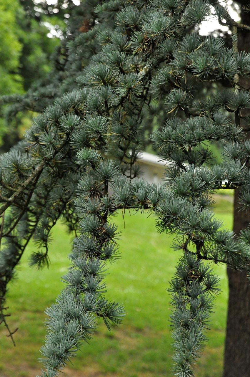 Tree detail