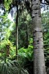 Tropical bark