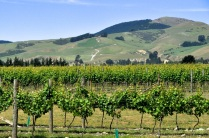 Waipara Hills Vineyard