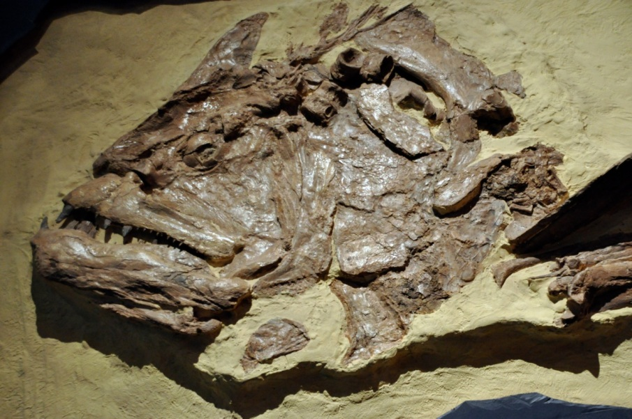 Xiphactinus, 80 million, 18' long