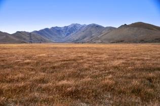 Tussock grassland