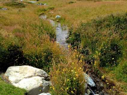 Stream with flowers