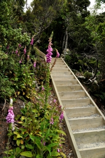 The stairs continue (with flowers)