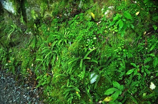 Moss and fern
