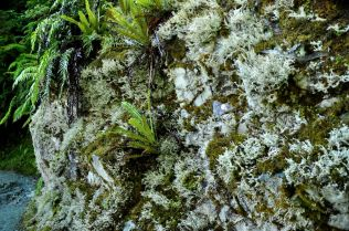 Solid lichen and fern