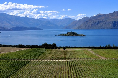 Rippon Vines (nice location!)