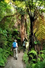 Trail and tree ferns