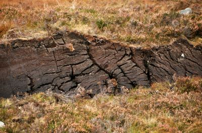 Layers of peat under that grass