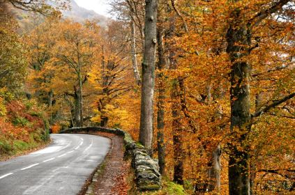 "The road to Derwentwater Lake is in a ""bright spot""!"