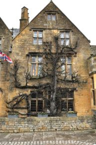 Espalied tree against the Arms Hotel