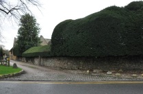 Hedges in Broadway
